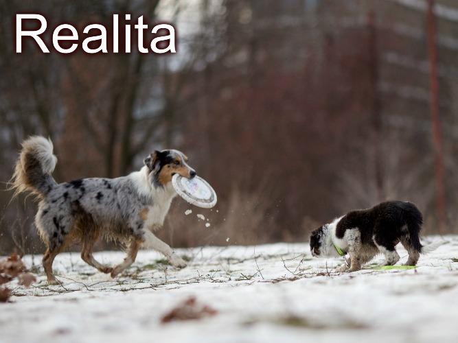 Internet versus realita