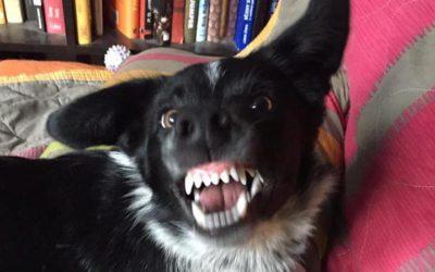 Agresivní štěně